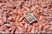 Продажа черноморской креветки фото